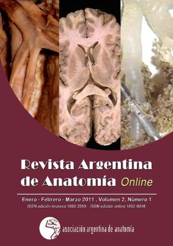 Revista Argentina de Anatomía Online 2011; 2(1): págs. 1-34. by ...