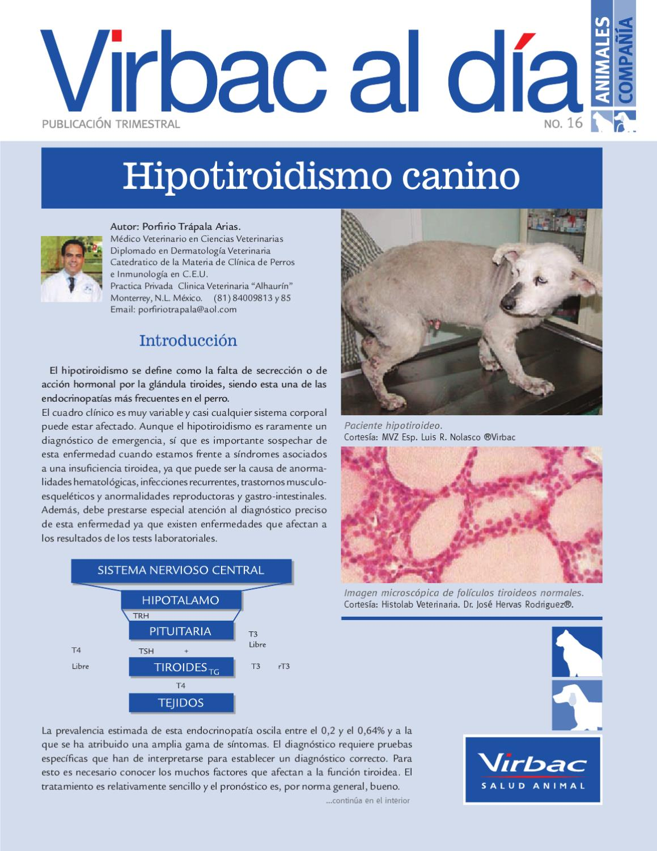 rango de referencia t4 diabetes canina