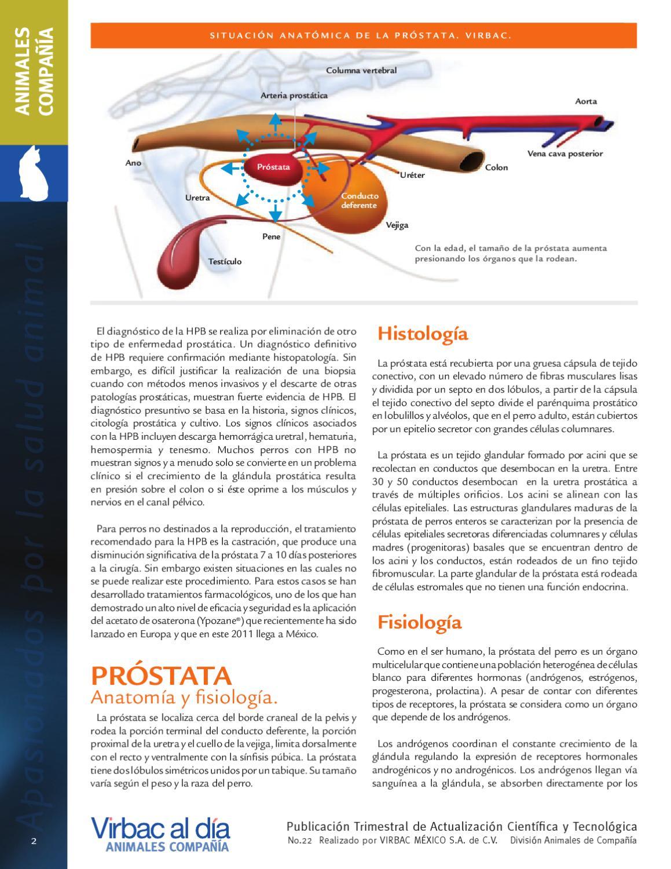 prostata de estructura heterogenea
