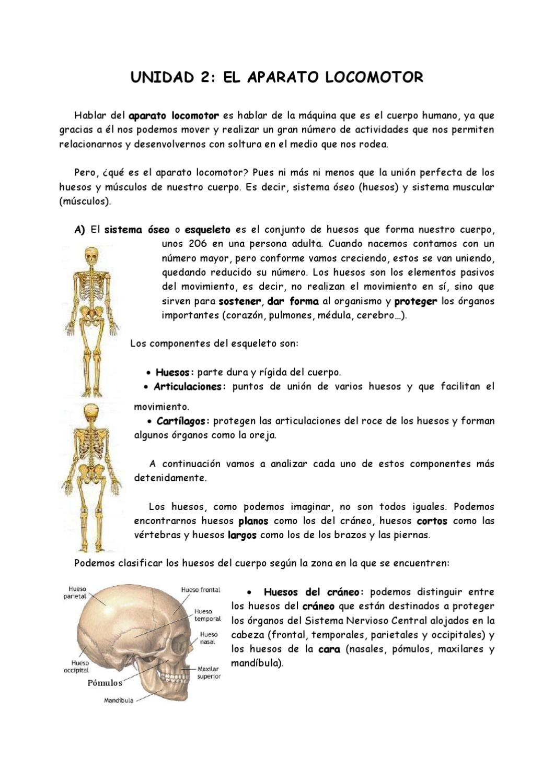 Excepcional Sistema Esquelético 206 Huesos Festooning - Imágenes de ...