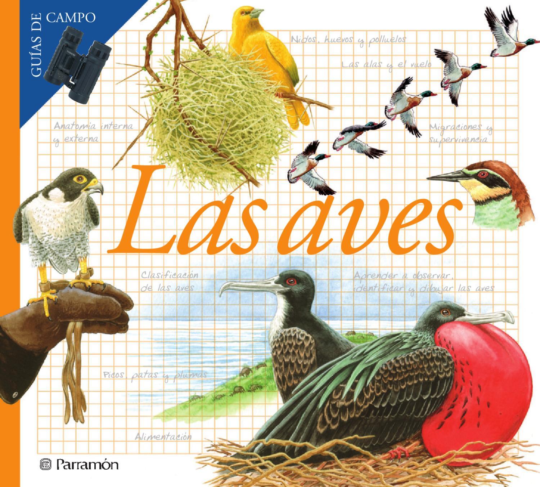 Guías de campo - Las aves by Jose Carlos Escobar - issuu