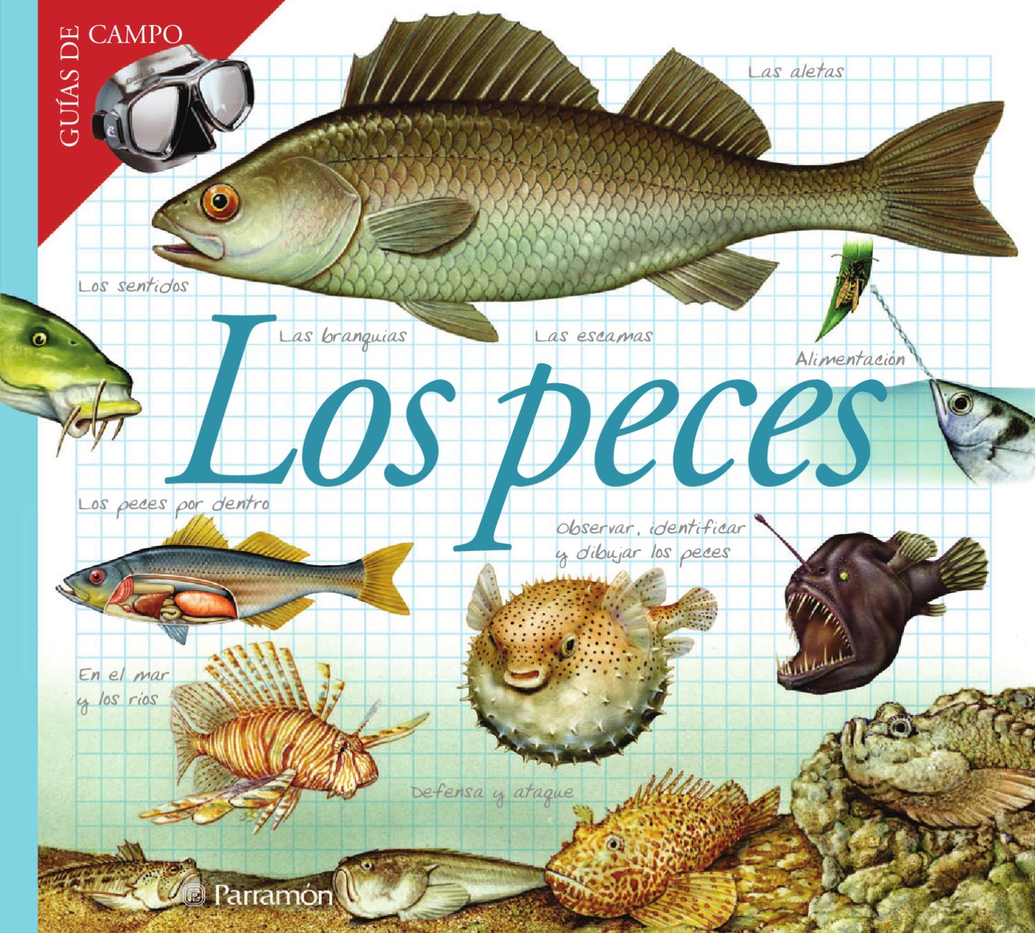 Gu as de campo los peces by jose carlos escobar issuu for La reproduccion de los peces