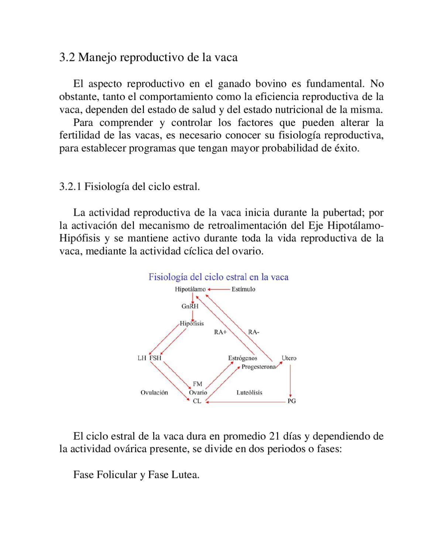 Manejo Reproductivo de la Vaca by Laboratorios Virbac México - issuu