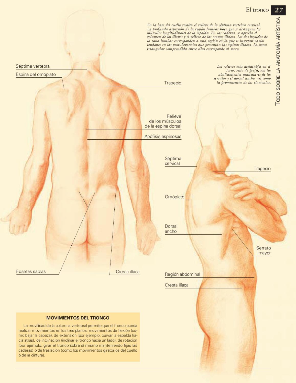 Bonito Cresta Ilíaca Friso - Anatomía de Las Imágenesdel Cuerpo ...