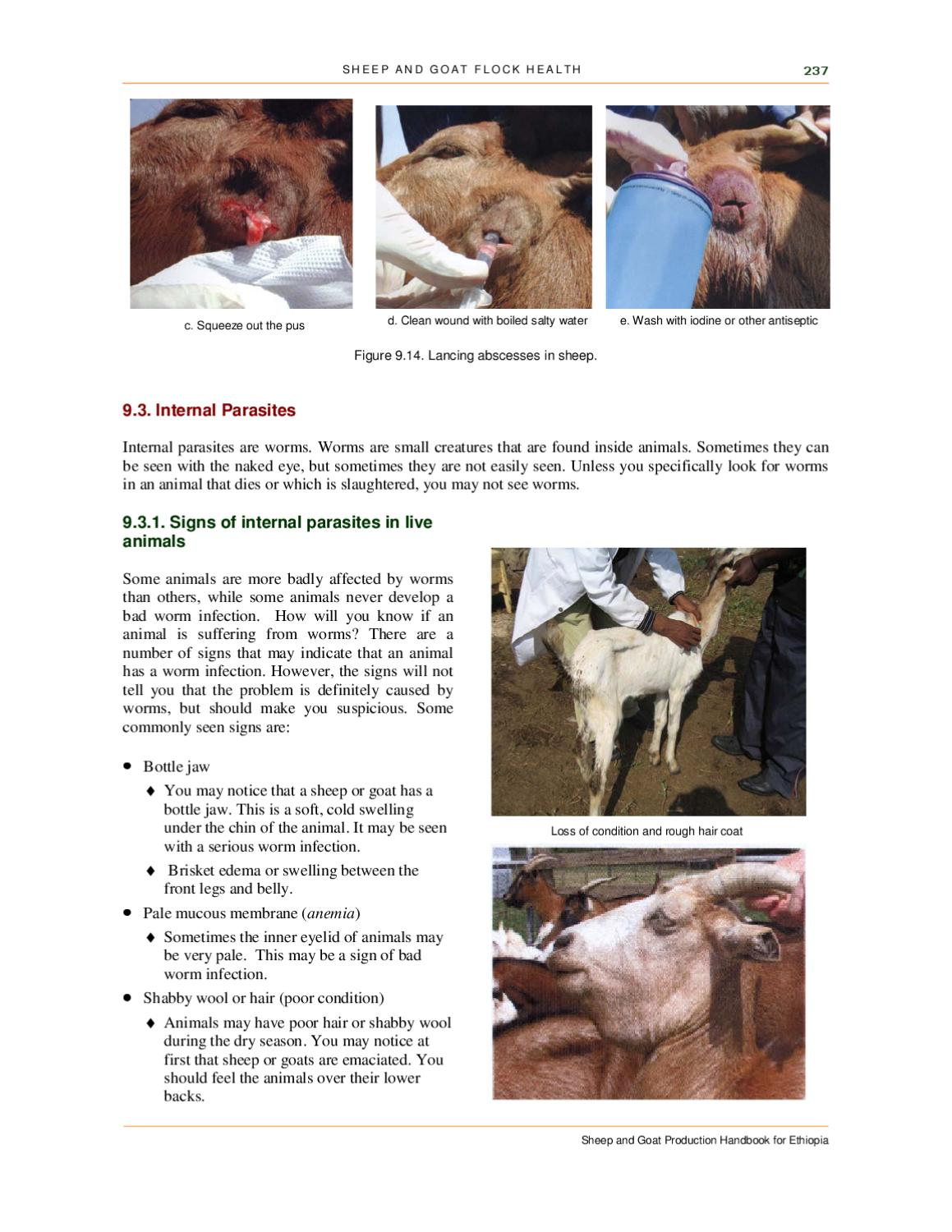 Sheep and Goat Production Handbook for Ethiopia - complete