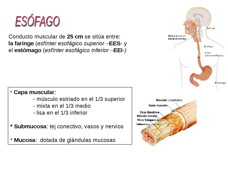 Patologia esofágica by Antonio Cardoso - issuu
