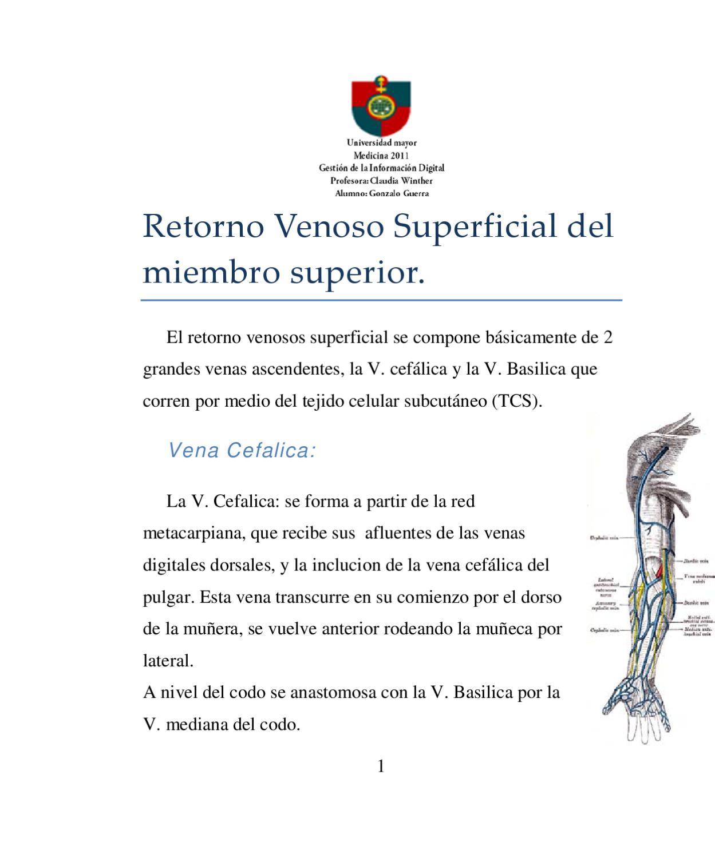 Retorno venoso del miembro superior by Gonzalo Guerra - issuu