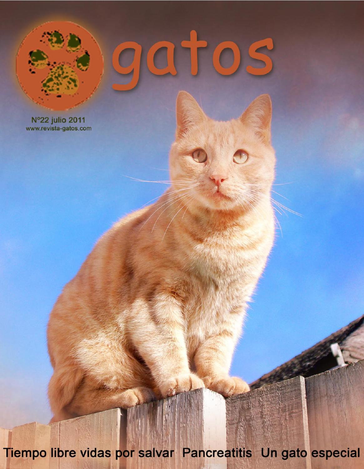 Revista Gatos N 22 by Revista Gatos - issuu