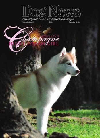 381 Chrome License Plate Frame Doberman Pinscher Everything Else Is Just A Dog