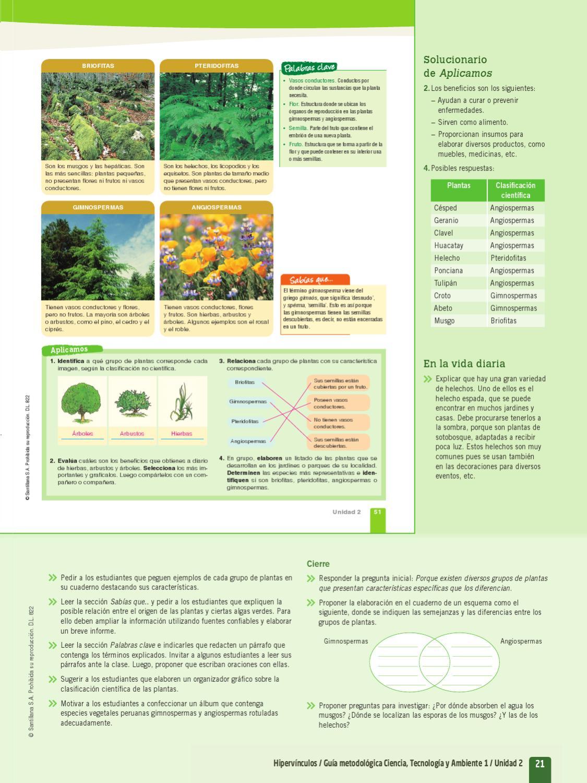 En que se diferencian las plantas gimnospermas de las angiospermas