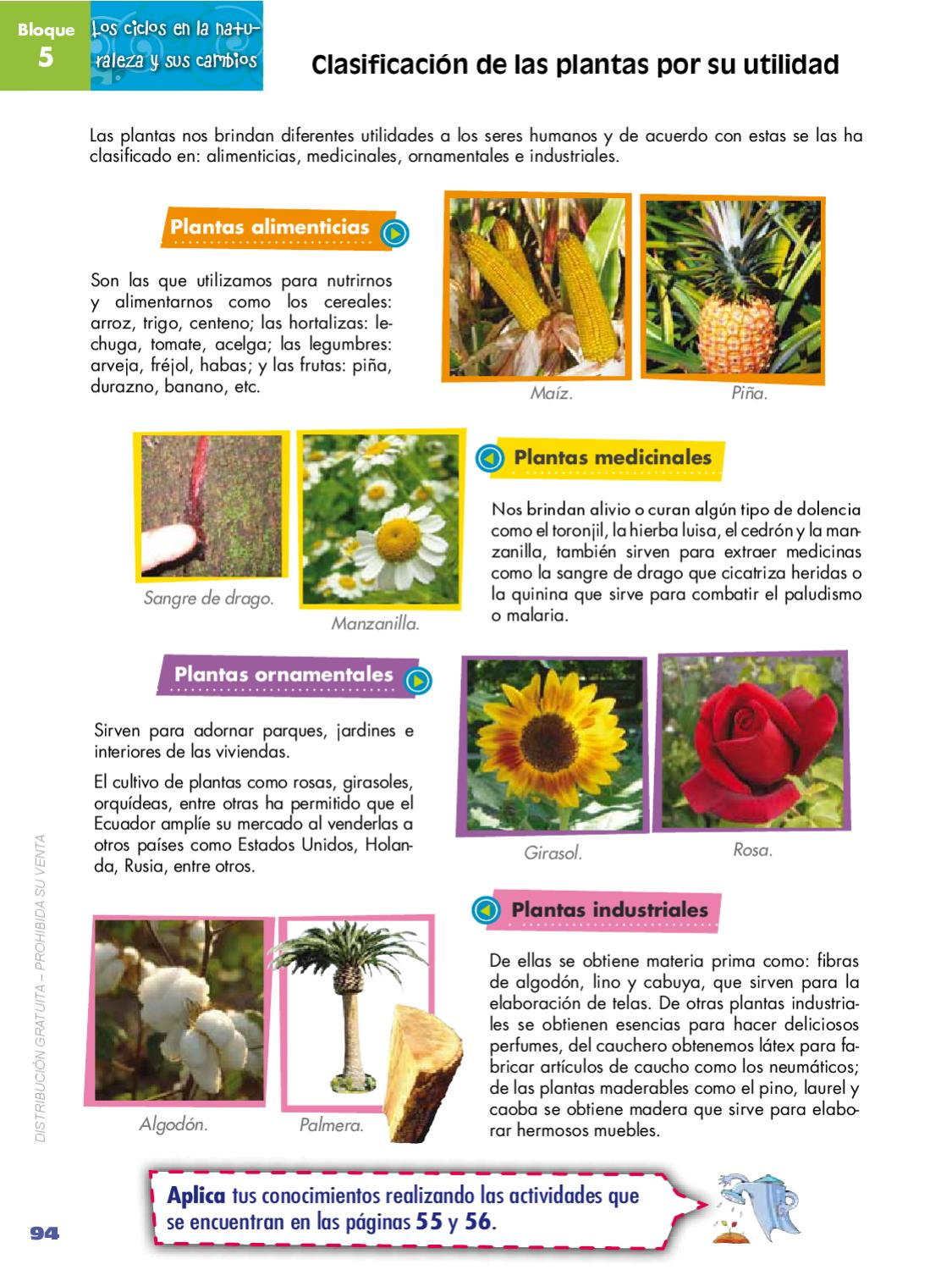 Naturales 4 by quito ecuador issuu for Tipos de plantas ornamentales de venezuela