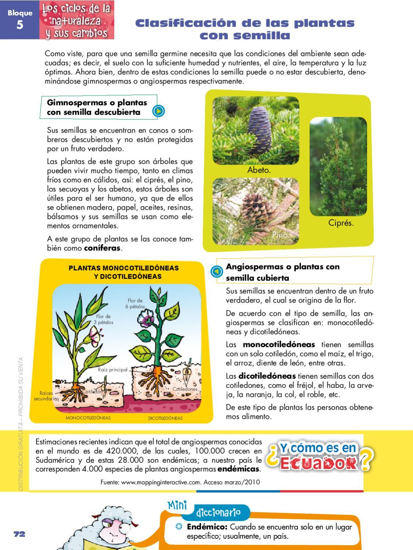 Naturales 5 by quito ecuador issuu for Plantas ornamentales del ecuador