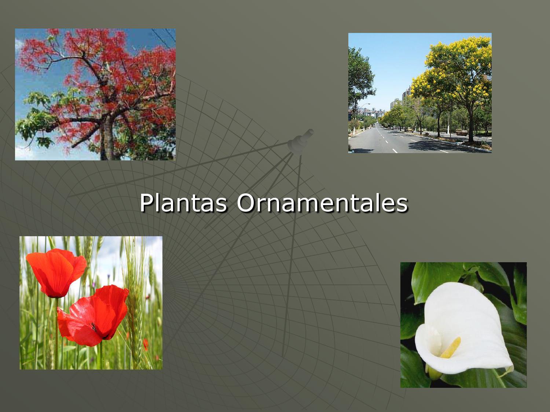 plantas ornamentales by gustavo serres issuu