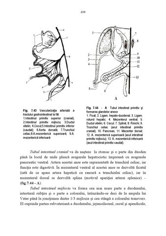 Anatomie Clinica by MD Admission Consulting - issuu