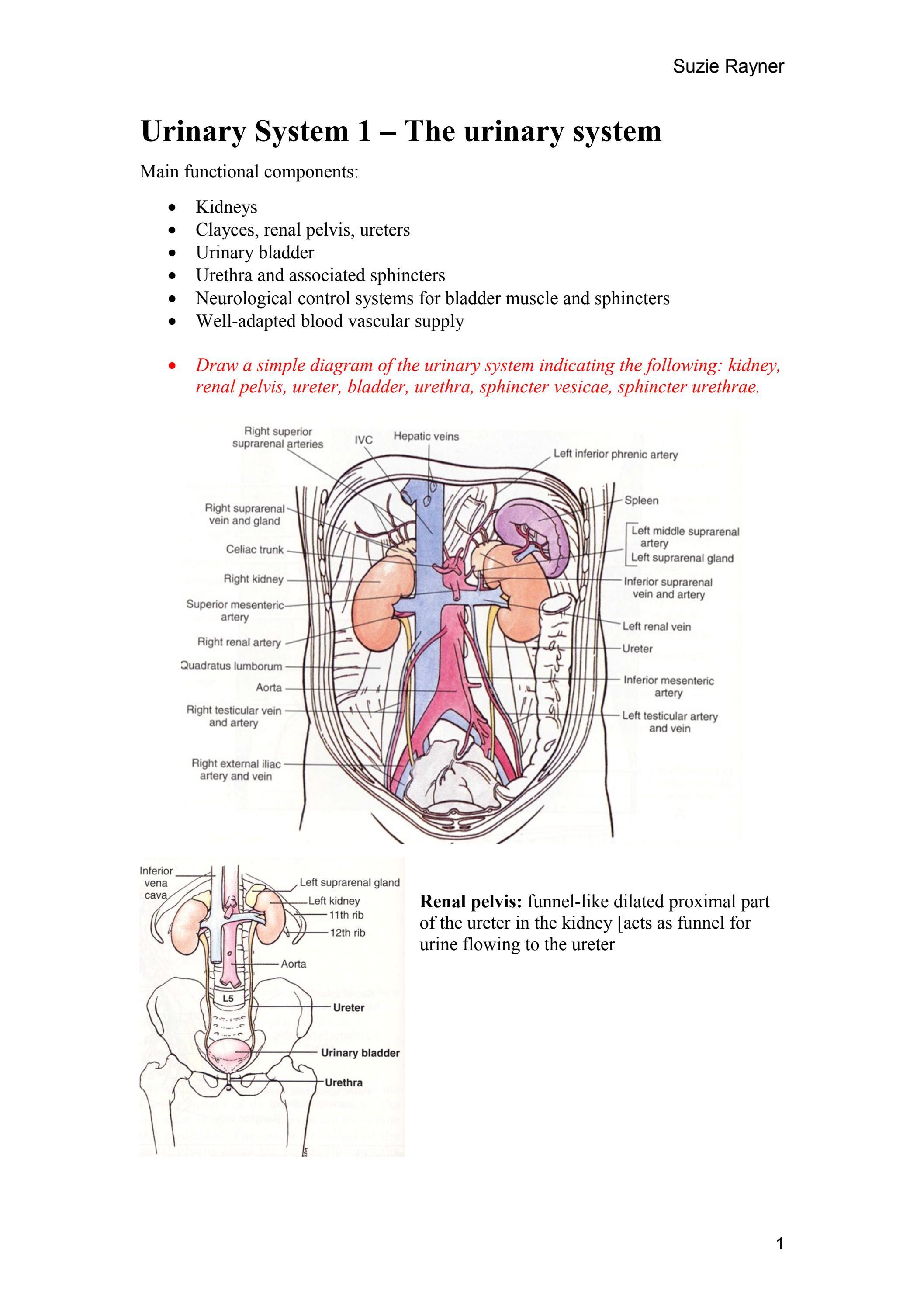 Suzie urinary notes by icsm su issuu pooptronica