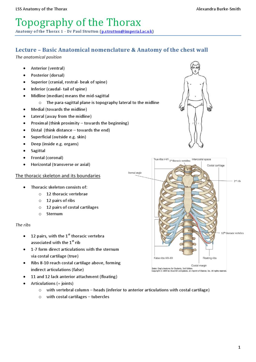 Alex\'s Anatomy of the Thorax by ICSM SU - issuu