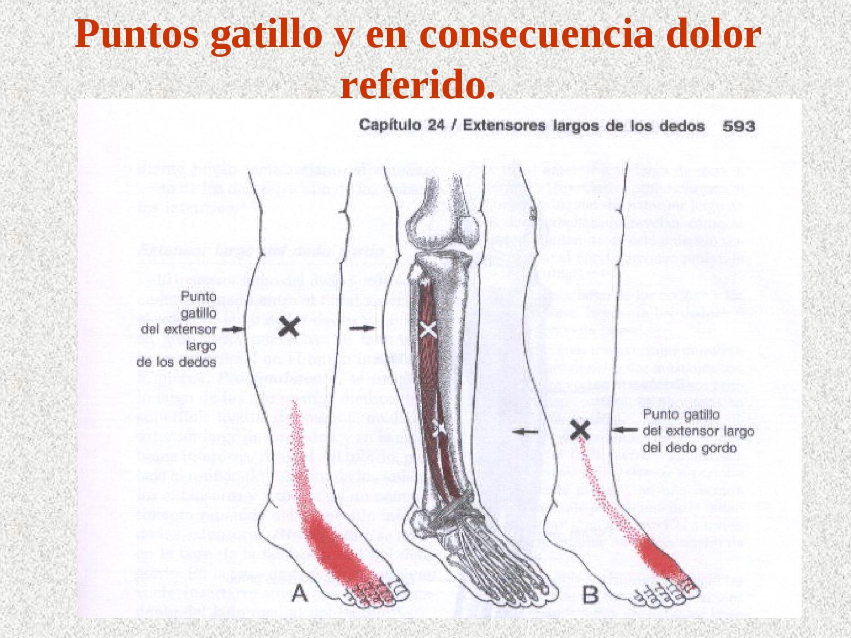 Puntos gatillo de pierna y tobillo 1-3 2 by Antonio Castillo - issuu