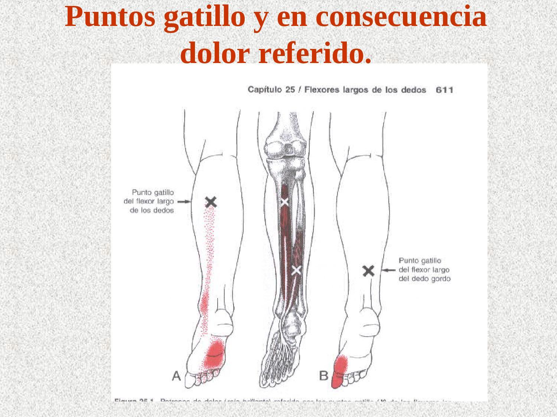 Puntos gatillo de pierna y tobillo 1-3 4 by Antonio Castillo - issuu