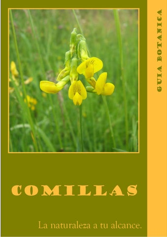 Guía Botánica Comillas by Comillas Turismo - issuu