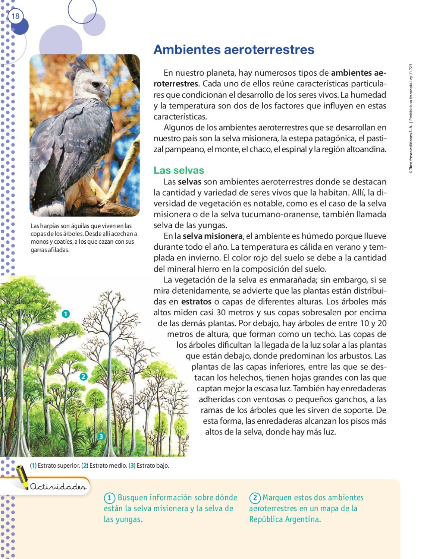 Ciencias naturales 6 bonaerense by tinta fresca tinta for Cuales son los arboles perennes