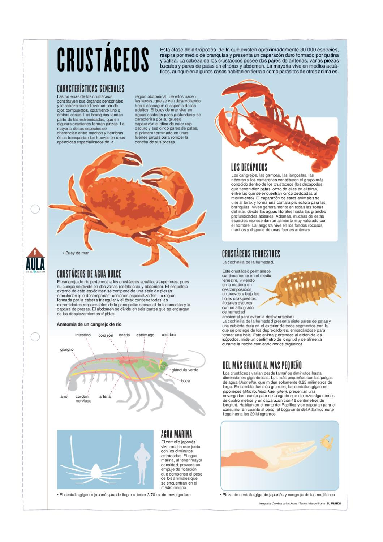 Crustáceos by Pedro Márquez - issuu