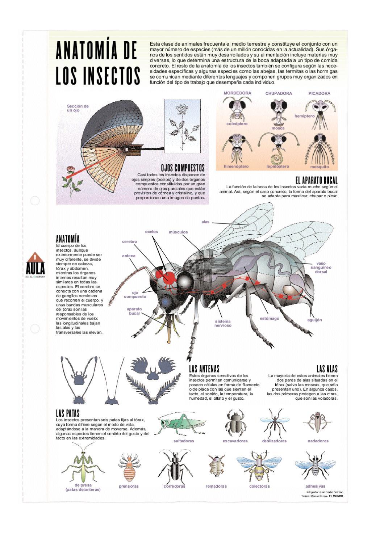 Anatomía de los insectos by Pedro Márquez - issuu