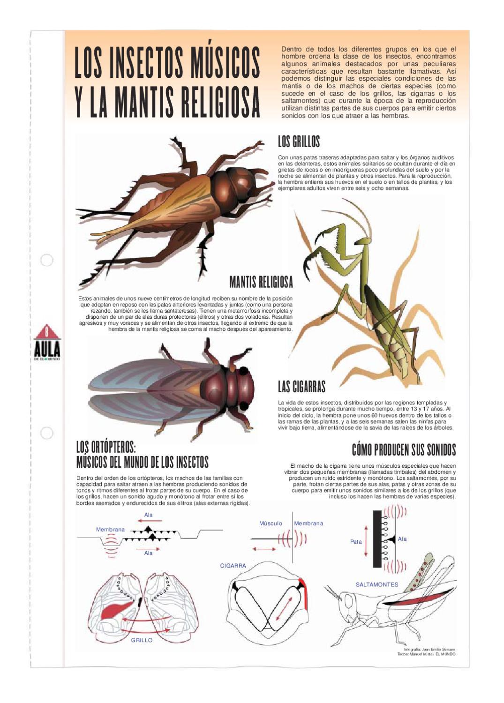Los Insectos músicos y la mantis religiosa by Pedro Márquez - issuu