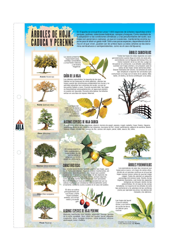 Rboles de hoja caduca y perenne by pedro m rquez issuu for Arboles para veredas hojas perennes