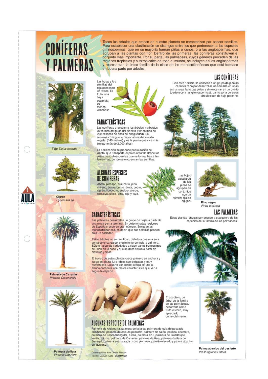 Con feras y palmeras by pedro m rquez issuu for Caracteristicas de arboles frondosos