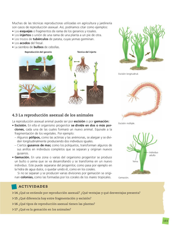 Ejemplos de escision reproduccion asexual de plantas
