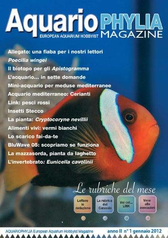 Aquariophylia 2 2012 febbraio by valerio zupo issuu aquariophylia 1 gennaio 2012 fandeluxe Gallery