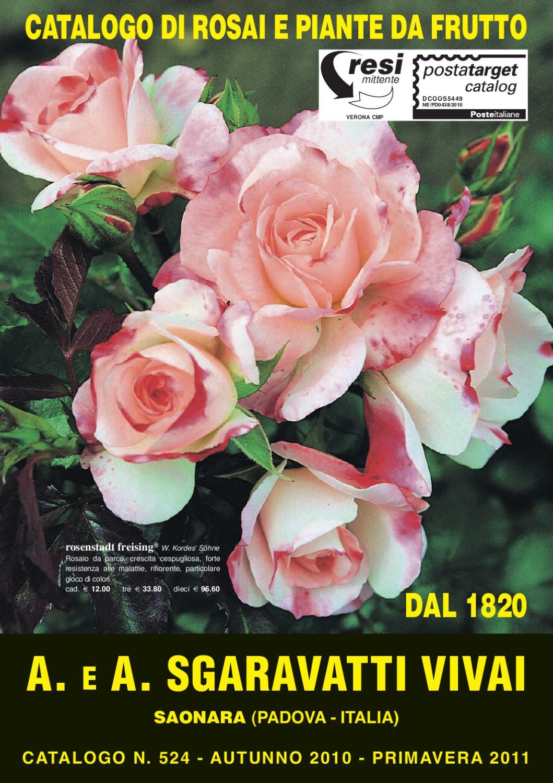 Rose Da Taglio Rifiorenti sgaravatti by luca prando - issuu