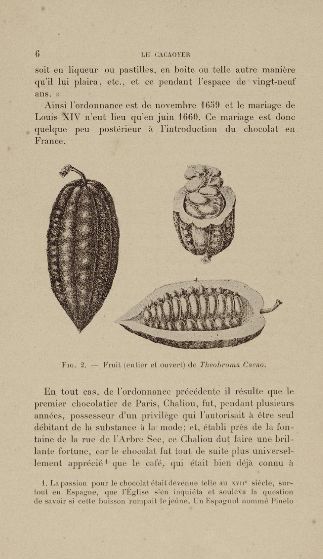 le cacaoyer sa culture et son exploitation dans tous les pays de