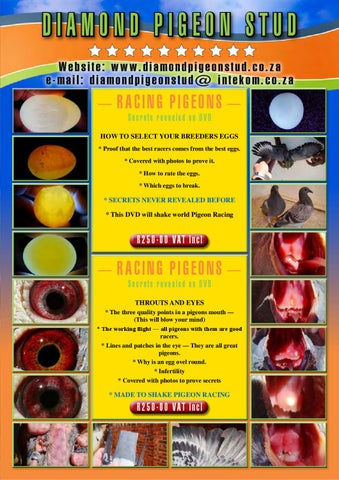 Diamond Pigeon Stud Catalogue 2010 by Koos Gagiano - issuu