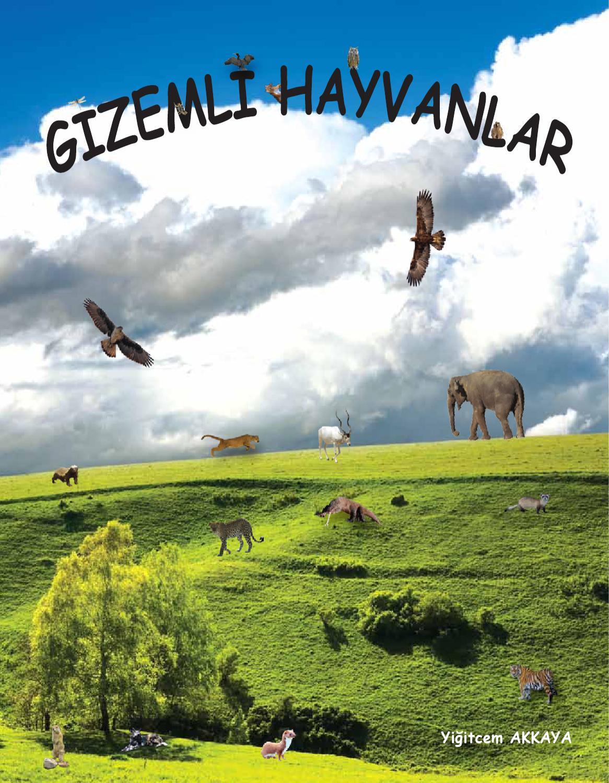 Pek Tanınmayan Bir Türkiye Köpeği: Trabzon Zerdava