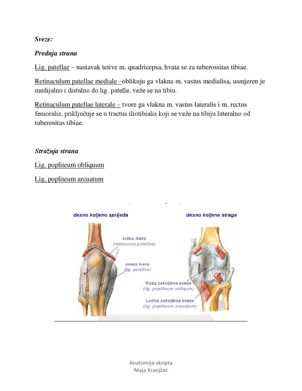 Anatomija potkoljenice by Maja Maja - issuu