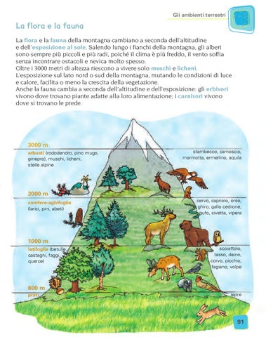 Magicamente insieme 3 sto geo by elvira ussia issuu - Immagini da colorare delle montagne ...