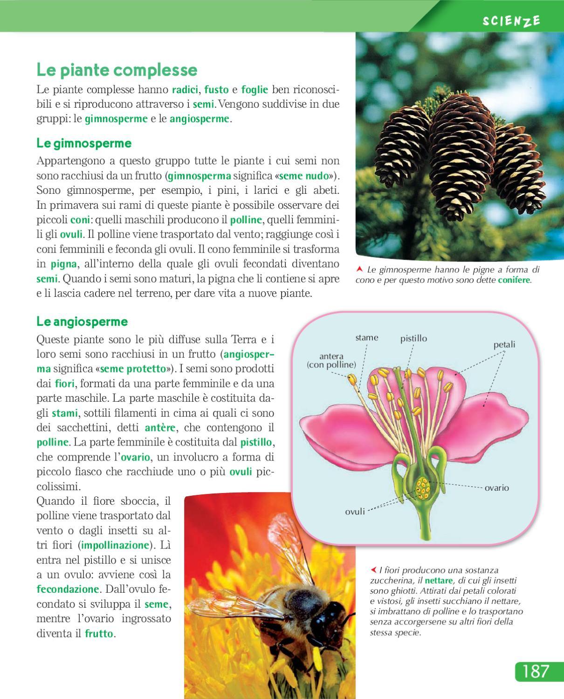 Urra 4 by elvira ussia issuu for I semi della pigna