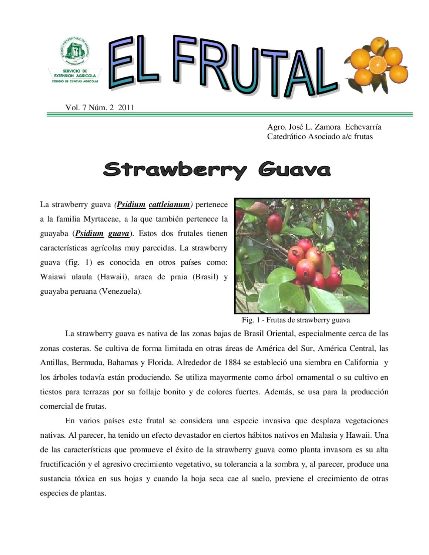 La Strawberry Guava By Servicio De Extensión Agrícola Upr