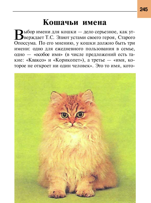 Кличка для кошки девочки королевские