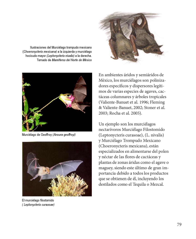 GENTE TOXICA BERNARDO STAMATEAS DESCARGAR PDF