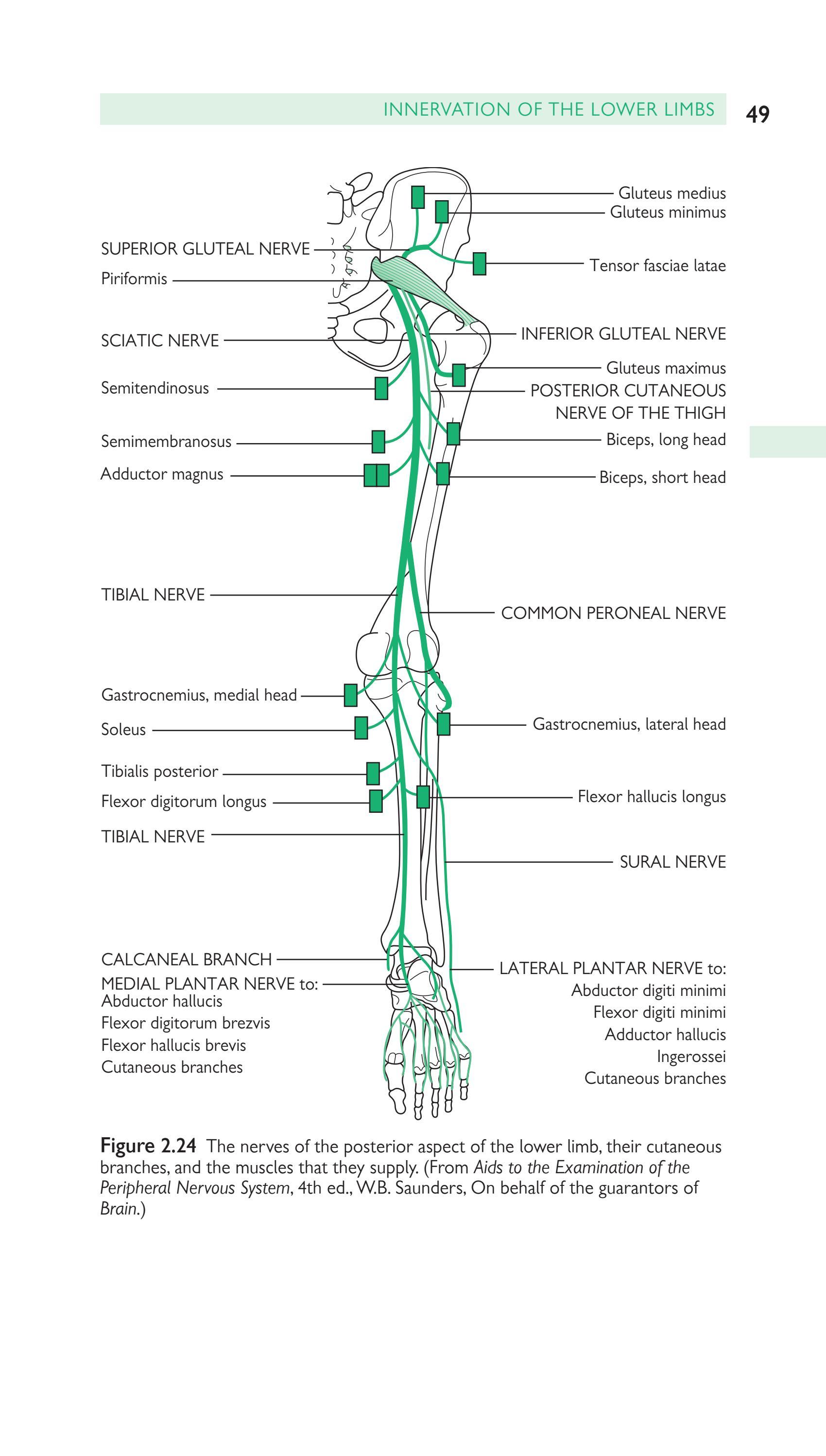 Handbook_Of_Neurology by manuel Montellanos - issuu