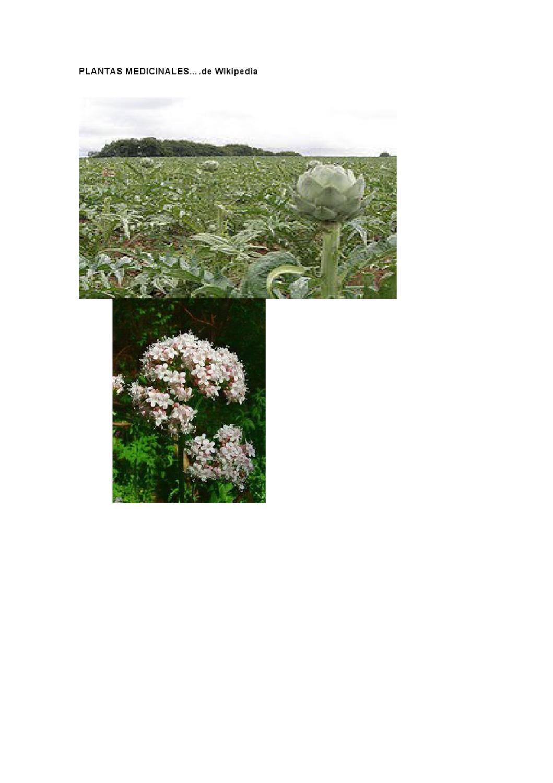 para que sirve el anis como planta medicinal wikipedia