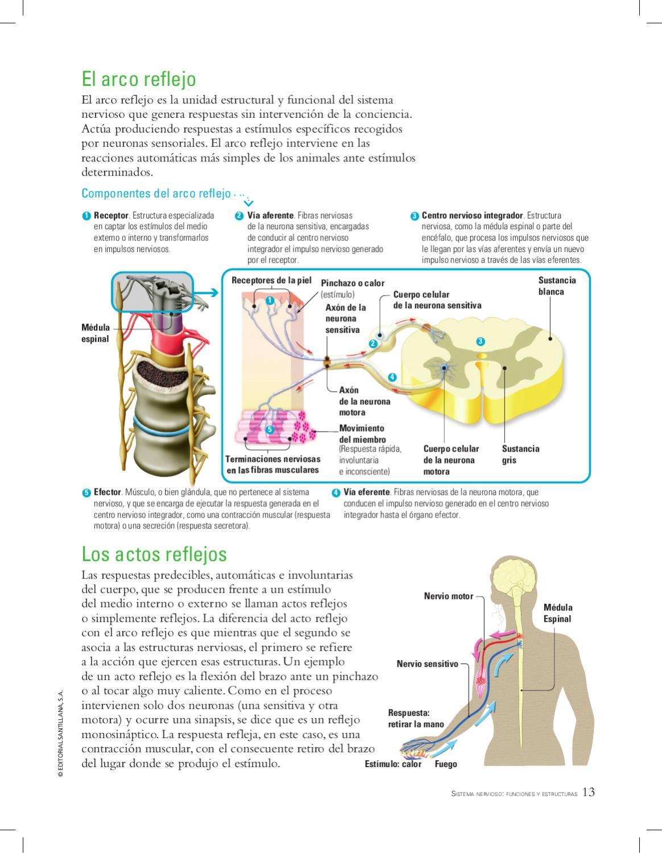 BIOLOGÍA 2, serie Conexos by SANTILLANA Venezuela - issuu
