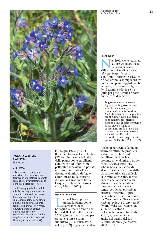 Fiori Selvatici Foto E Nomi piante medicinali by ilisso - issuu