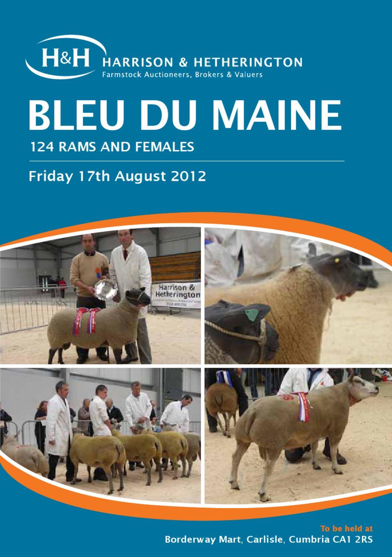 Bleu du Maine Sheep Sale by Harrison & Hetherington - issuu