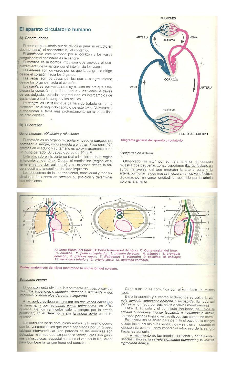 Sistema circulatorio by Stella Maris - issuu