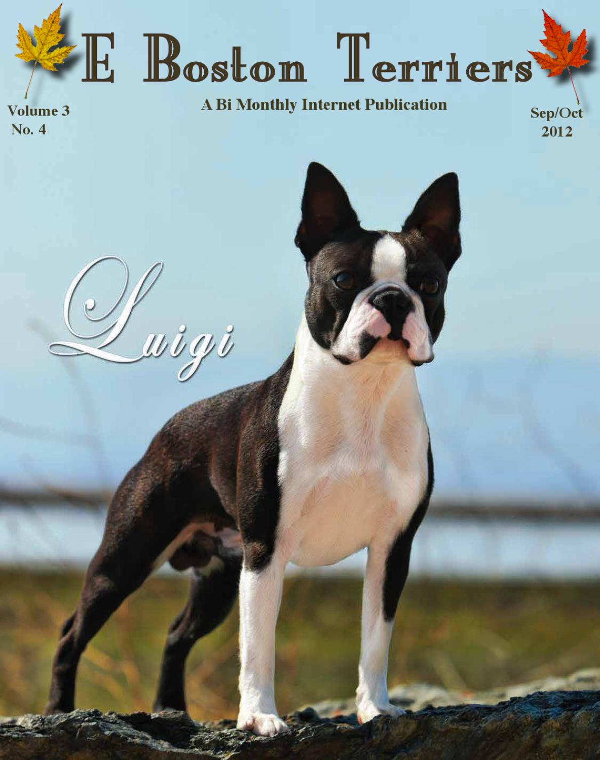 e boston terriers sept oct 2012 by e dogmagazines issuu
