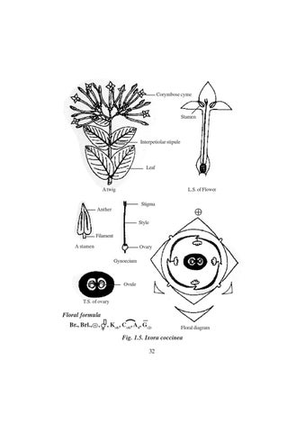 Std12 botany em by bevin levin issuu page 38 ccuart Gallery