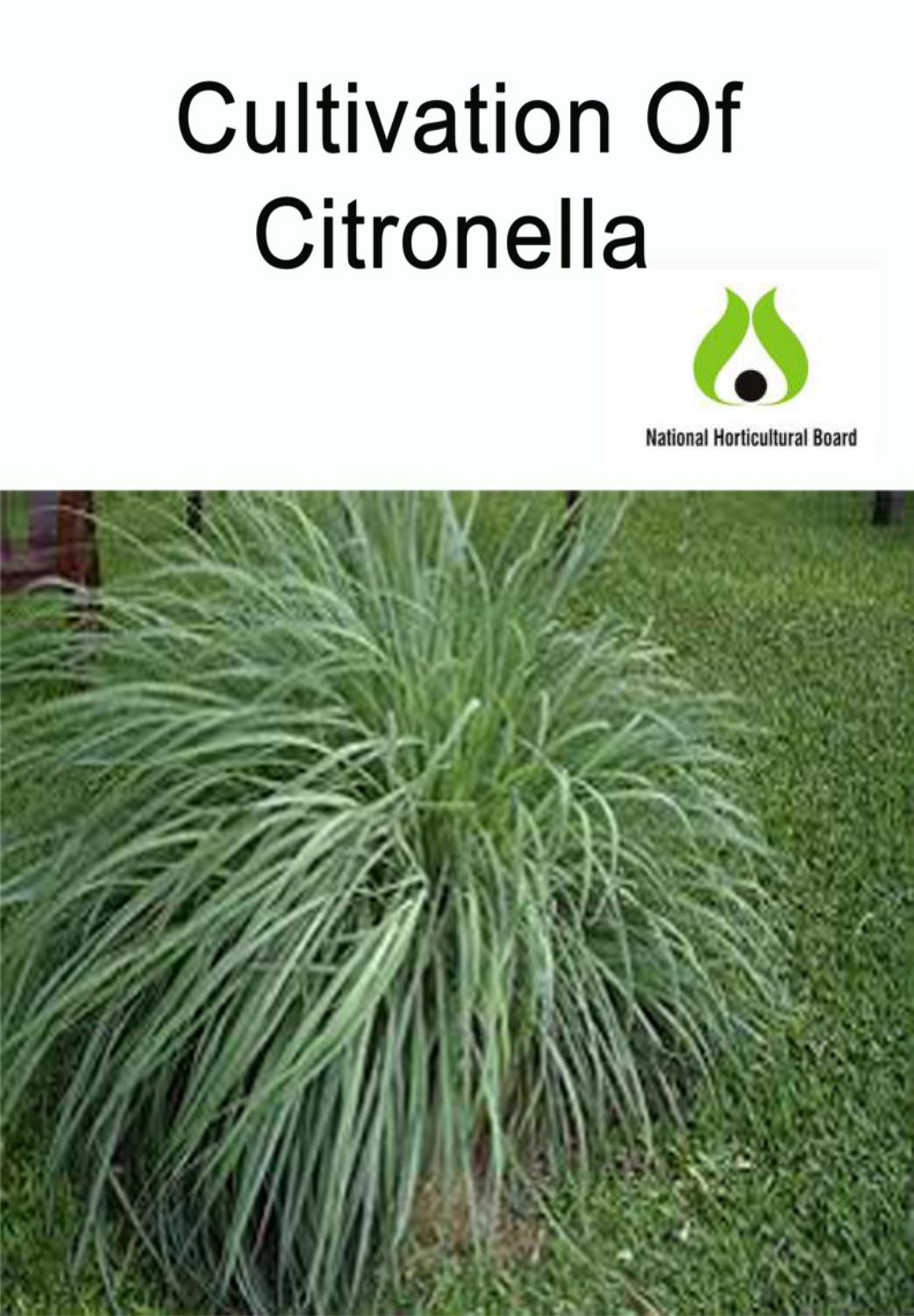 Cultivation Of Citronella Nhb By Kisan Forum Pvt Ltd Issuu